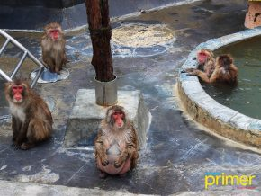 JAPAN TRAVEL: Hakodate Tropical Botanical Gardens is Where You Can Meet Hot-Tubbing Monkeys!