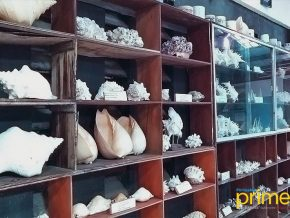 Nova Shell Museum in Panglao, Bohol: One of the Biggest Shell Collections in the World