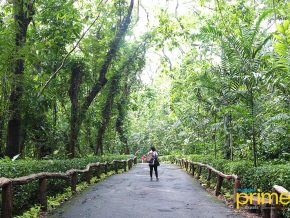 La Mesa Eco Park in Quezon City: the Metro's True Forest Recreational Park
