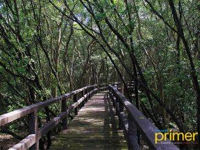 Las Piñas-Parañaque Critical Habitat and Ecotourism Area: PH Natural Defense Against Disasters