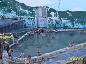Hakodate Tropical Botanical Garden: Home of The Hot-Tubbing Monkeys and Greenhouse Garden